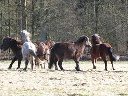 Paardenkudde